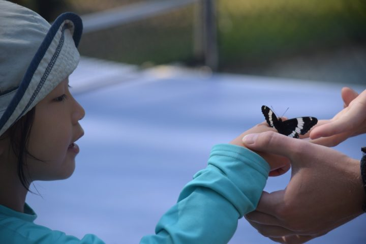 A camper says hello to a butterfly at Arrowhead Camp nature program.